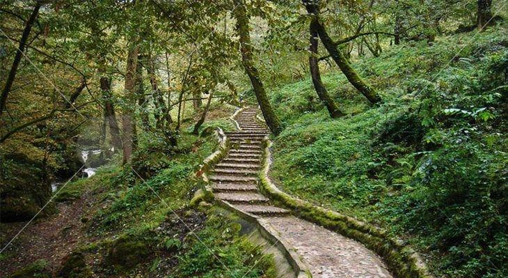 پارک جنگلی ماسوله با وجود کوهستانها و جنگلهای پوشیده در درختانی تنومند و سرسبز، یکی از دیدنیهای پربازدید و توریستی کشور بهشمار میرود