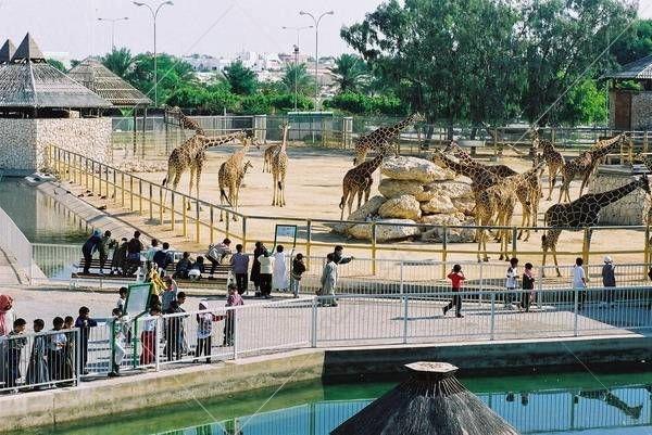 گردشگرانی که در قالب تور دوحه به این سرزمین سفر میکنند، میتوانند برای سپری کردن یک هیجان انگیز سری به مکانهای تفریحی و گردشگری شهر بزنند و از باغ وحش دوحه دیدن کنند
