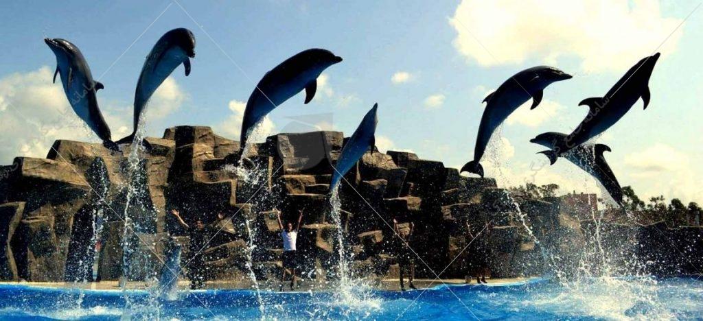 پارک دلفینها یکی از دیدنیهای باتومی است که در خیابان روستاولی قرار دارد.