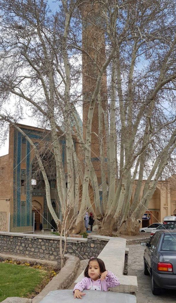 درخت چنار دو هزار ساله در نطنز